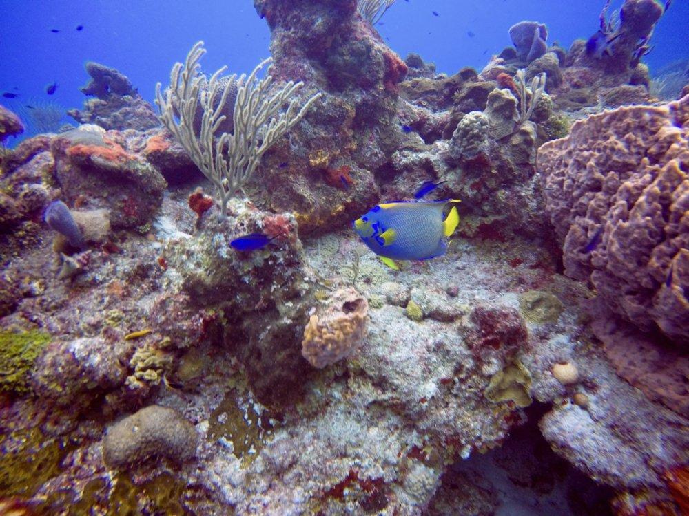 Dive Pics - 6.jpg