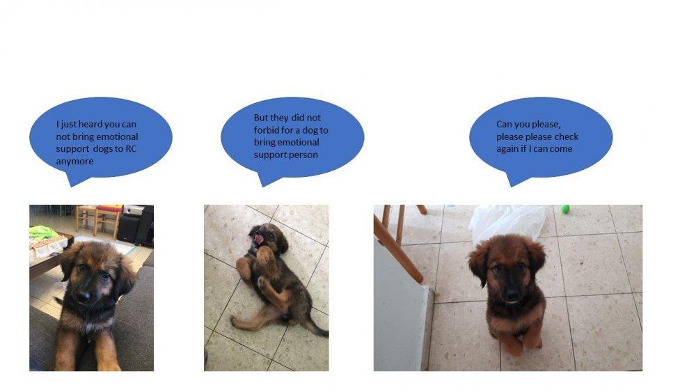 dog1.thumb.jpg.28dc39e5acfa4b0fdc1b9c96f4fe5614.jpg