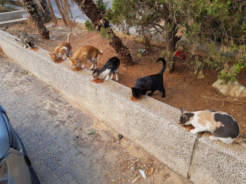cat.thumb.jpg.4d74df215ed1f413b817f8f8dd812066.jpg