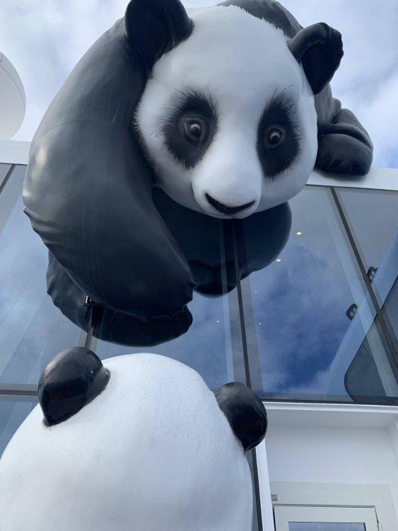 Panda.thumb.jpg.1172d7722c61afb9aad06a0bb9ab00a9.jpg