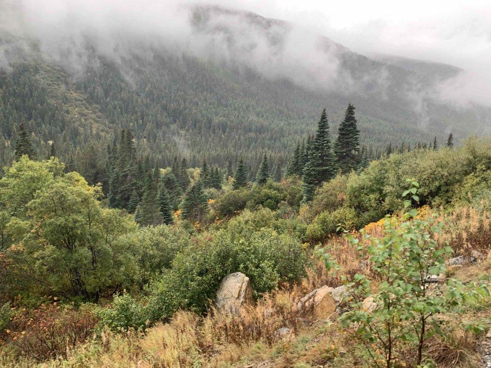 mountainside4.thumb.jpg.3821cf50cdde01582da67bdc22377120.jpg