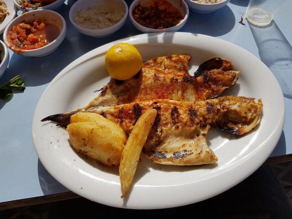fish1.thumb.jpg.735a7aafa83b086744ad57d4f2e2f547.jpg