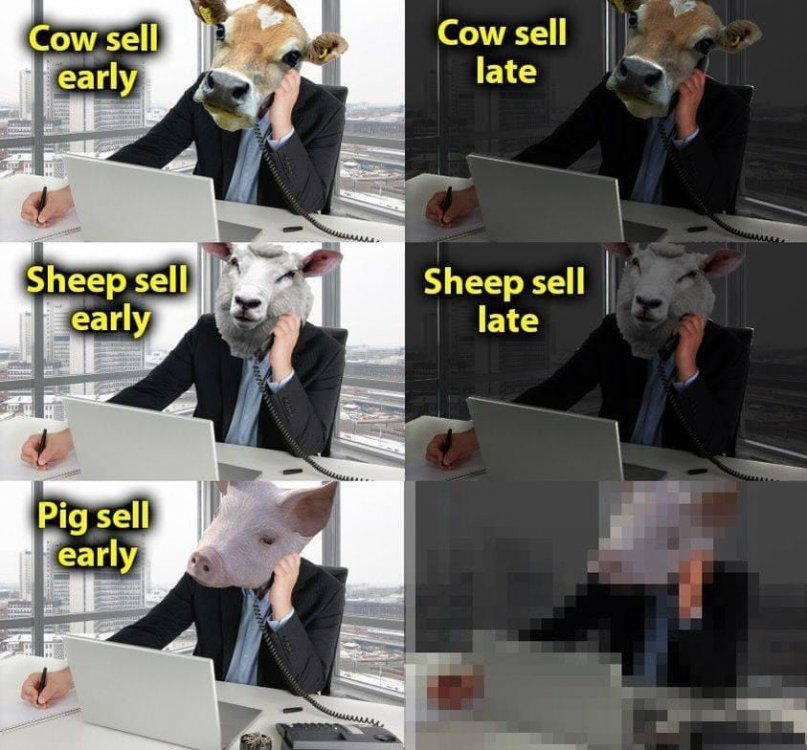 Pig sell late.jpg